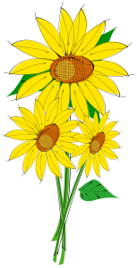 helianthus-flower